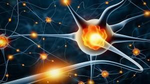 neurogenisis-e8ffb2e4-0bf1-4c78-bcf2-6e438523321e