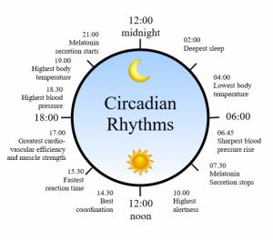 1462983035_circadian rhythm clock