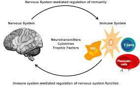 ns& Immune2